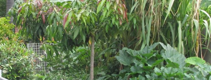 2 Hinemoa cropped