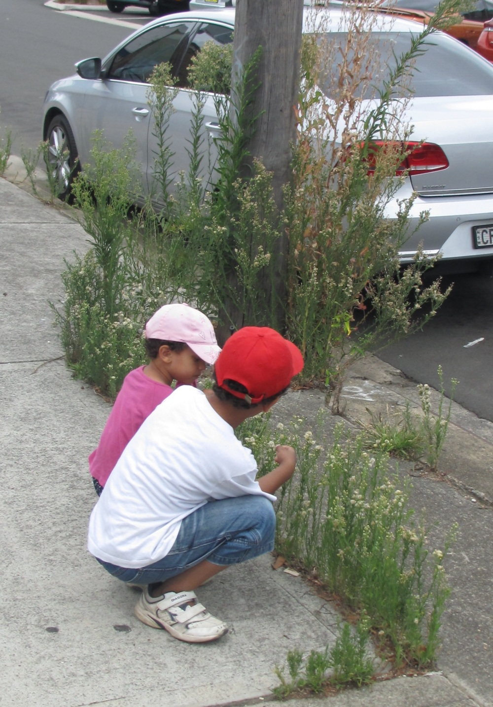 Anderson Ave 'weeds'