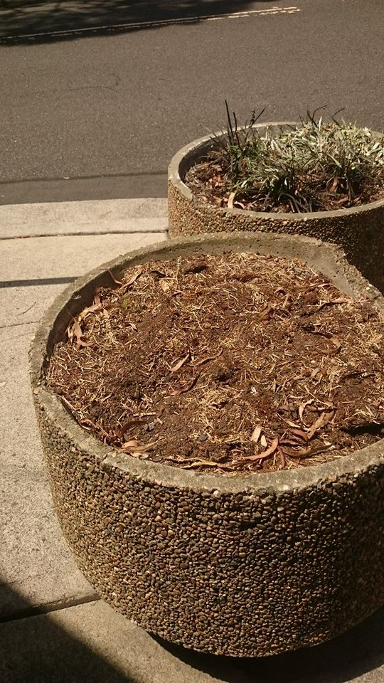 Planter After Council
